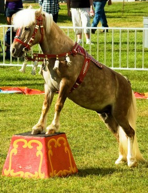 horse competition - future presidential debate format blog post - Delightability