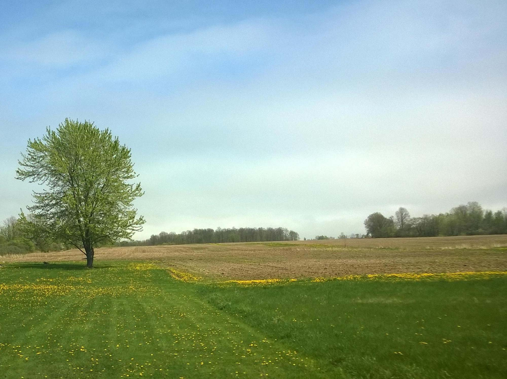 image of clear field with tree or object for plane approaching - Negative target fixation blog post - Greg Olson